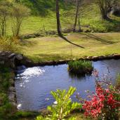 Extérieur - Bassin et plantes aquatiques