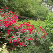 Terrain et fleurs