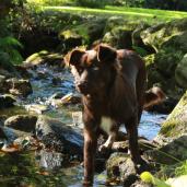 Extérieur - Chien dans le ruisseau